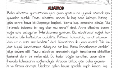 1. Sınıf Okuma Anlama Metni – 6 (Albatros)