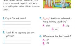 Okuduğunu Anlama (7)