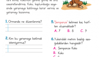 1. Sınıf Okuma Anlama Metni – 8 (Şempanze Koko)