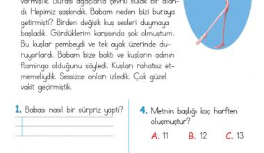 1. Sınıf Okuma Anlama Metni – 11 (Pembe Kuşlar)