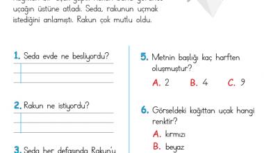 1. Sınıf Okuma Anlama Metni – 13 (Uçan Rakun)