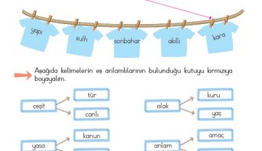 2. Sınıf Eş Anlamlı kelimeler-3