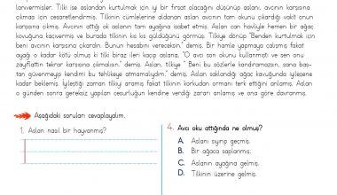 4. Sınıf Okuma Anlama Etkinliği – 9