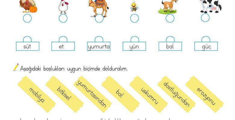 3. Sınıf Hayat Bilgisi (Hayvanlar ve Bitkilerin Yaşamımızdaki Önemi)